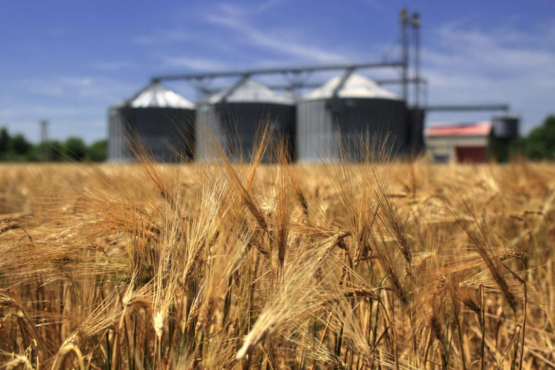 wheat field silos