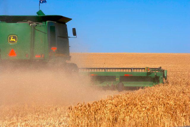 Wheat field e