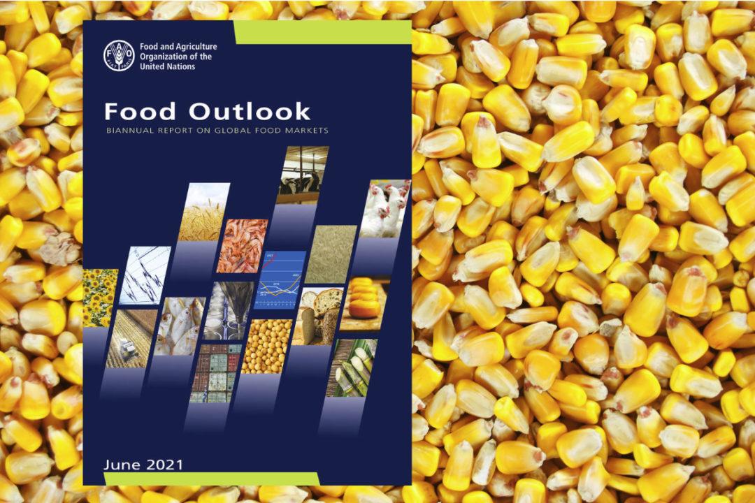 FAO-report.jpg