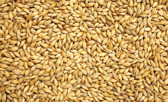 Grain sector rebounding from pandemic wheat photo cred adobe stock e july