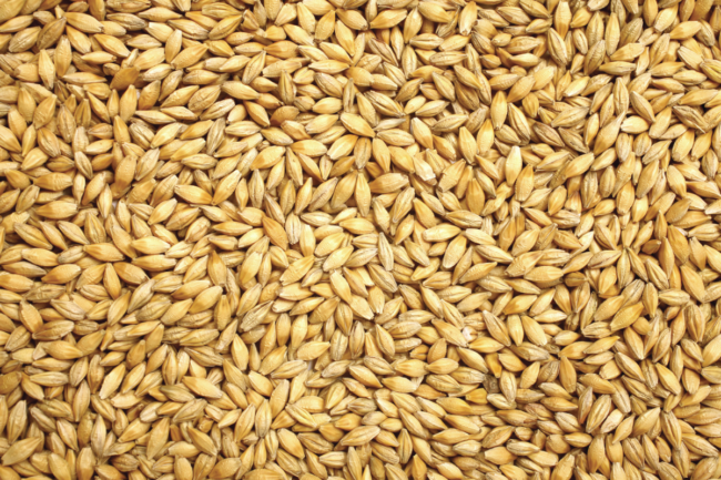 Grain-sector-rebounding-from-pandemic_wheat_photo-cred-adobe-stock_E_July.png