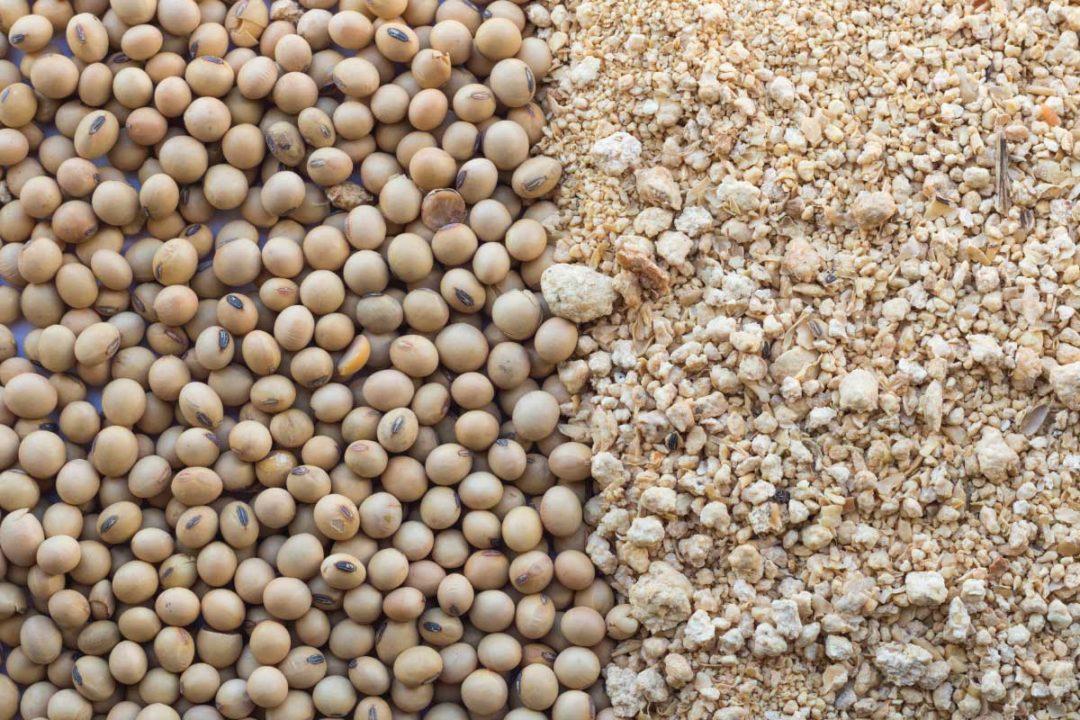 India Soybean, Adobe Stock