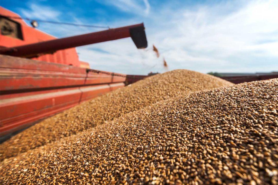 Adobe Stock, Wheat