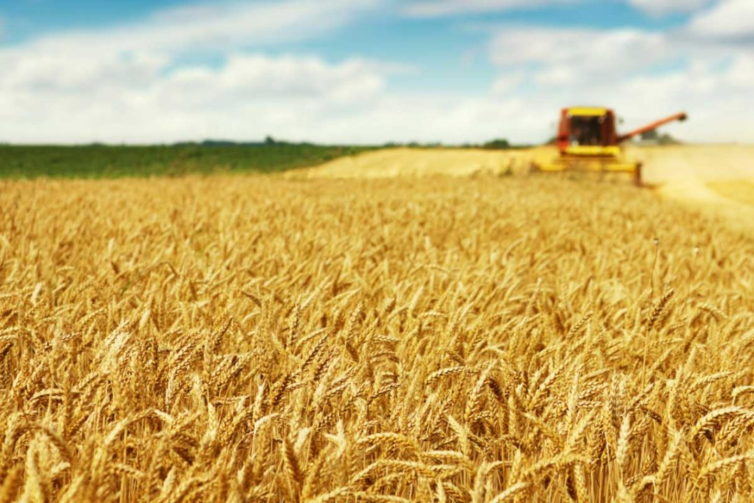 Soft Wheat, EU