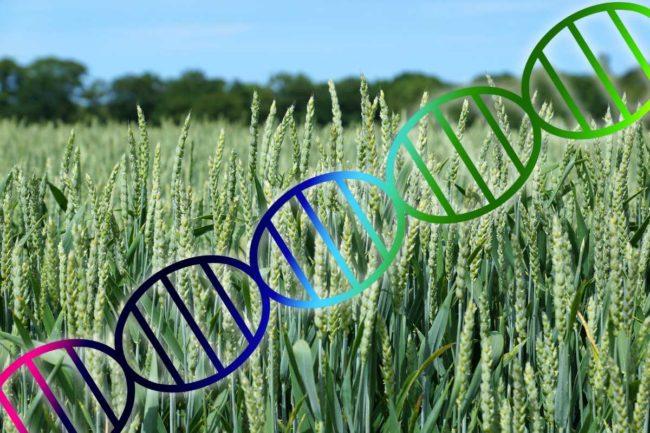 Wheat Genome