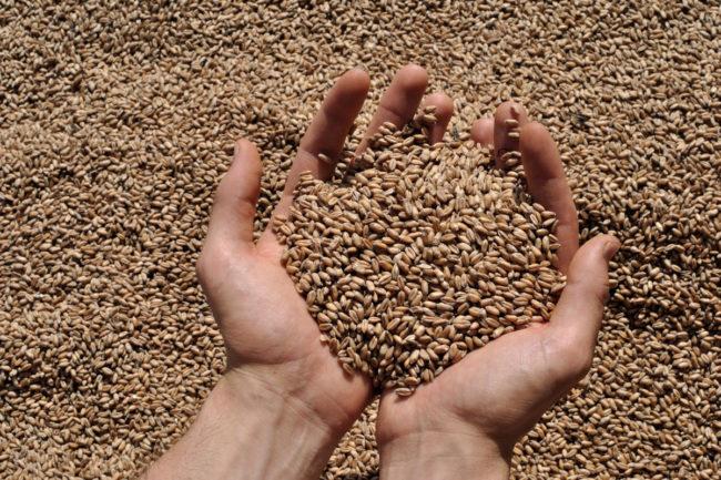 BoMill-grain.jpg
