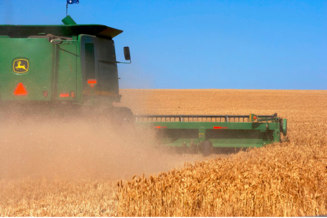 Brazil-GMO-Wheat.jpg