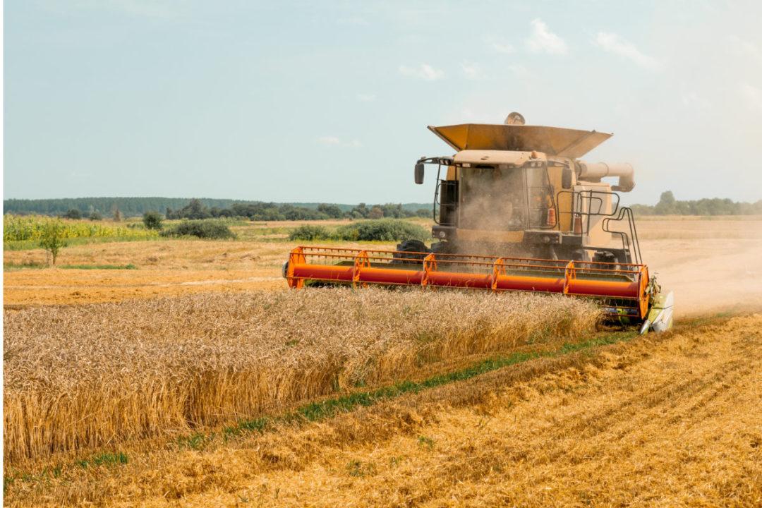 wheat-harvest.jpg
