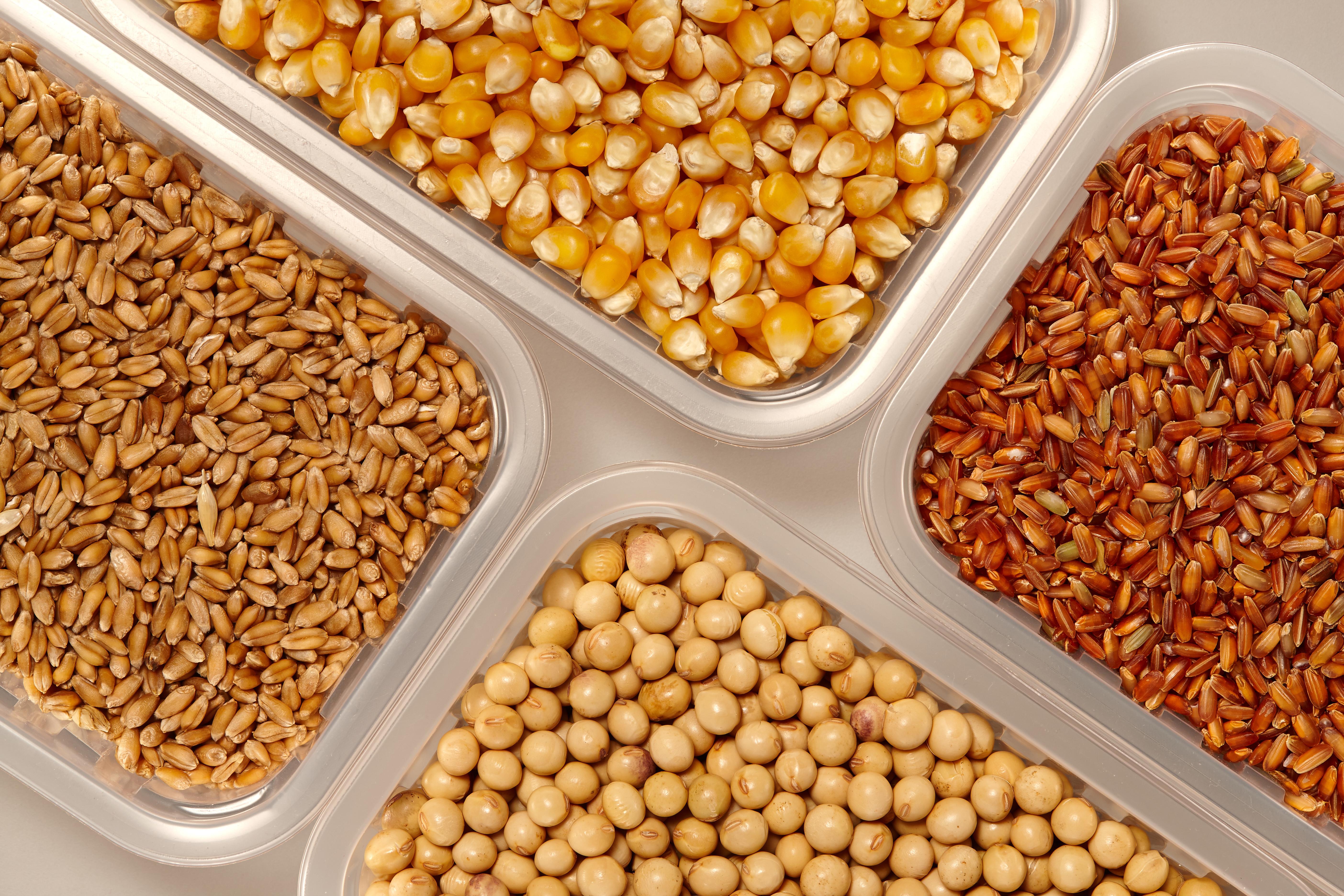 corn-rice-wheat-soybean-AdobeStock_192641392.jpeg