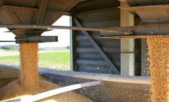 Corn adobestock 101251190 e1