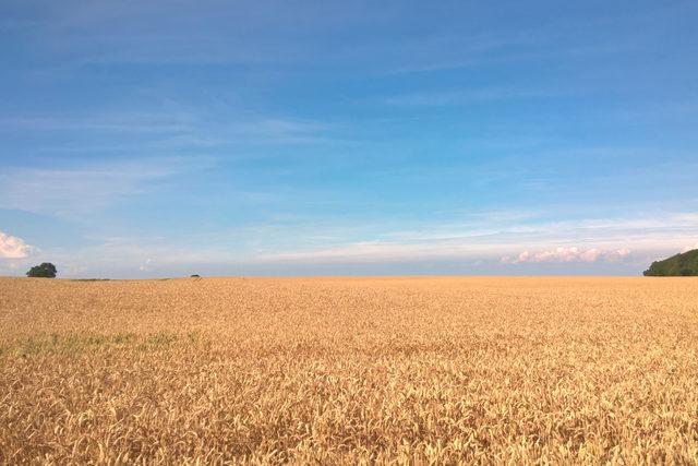 Muhlenchemie-gmbh-co-kg_wheat-field_photo-cred_muhlenchemie-gmbh-co-kg