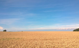 Muhlenchemie-gmbh-co-kg_wheat-field_photo-cred_muhlenchemie-gmbh-co-kg