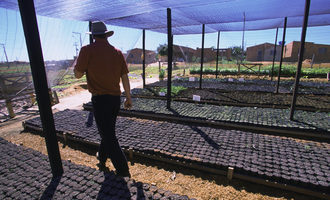 Nursery_for_reforestation_at_taquari_watershed_e