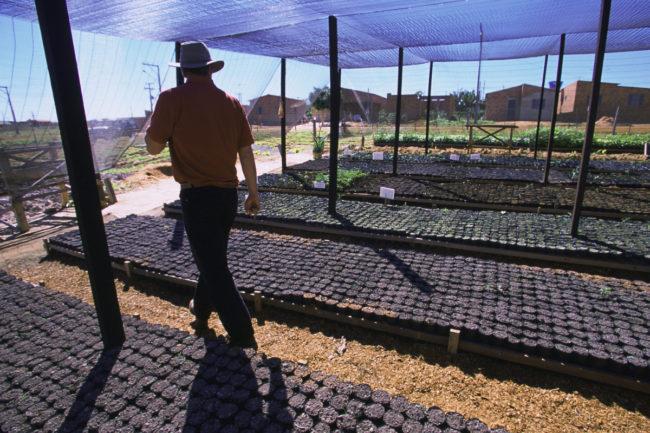 Nursery for reforestation