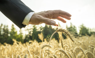 Wheat_adobestock_87739410_e