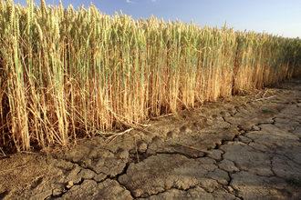 Wheat-dought_photo-cred-adobestock_24231357