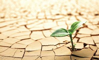 Drought_adobestock_31371221_e