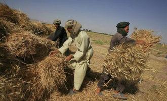 Fao_cereal-harvest-in-far-east_photo-cred-fao_e
