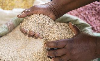 Grain-hands_shutterstock_1030322029_e