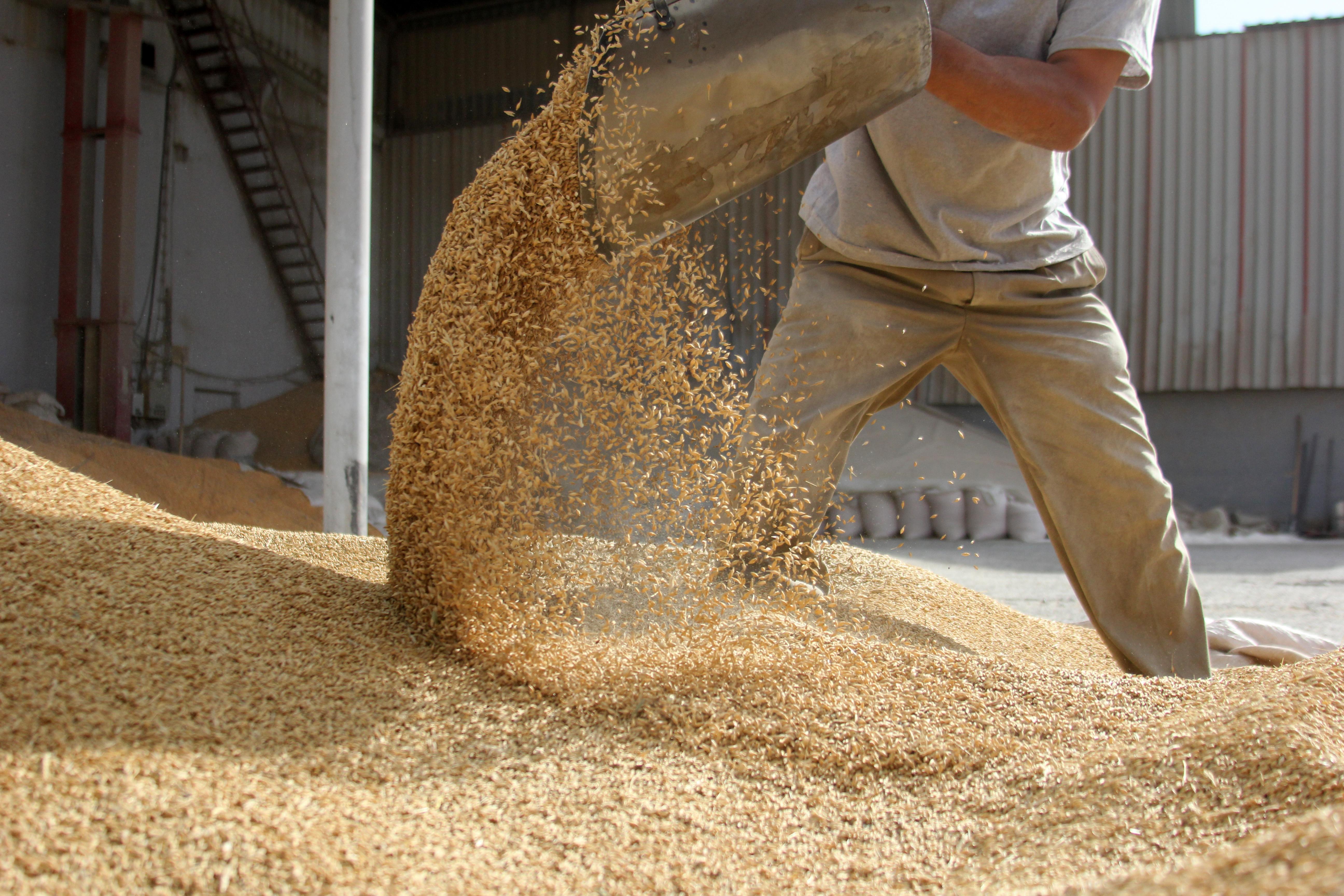 Grain-moving_adobestock_26233990