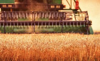 Wheat-harvest_photo-cred-adobe-stock