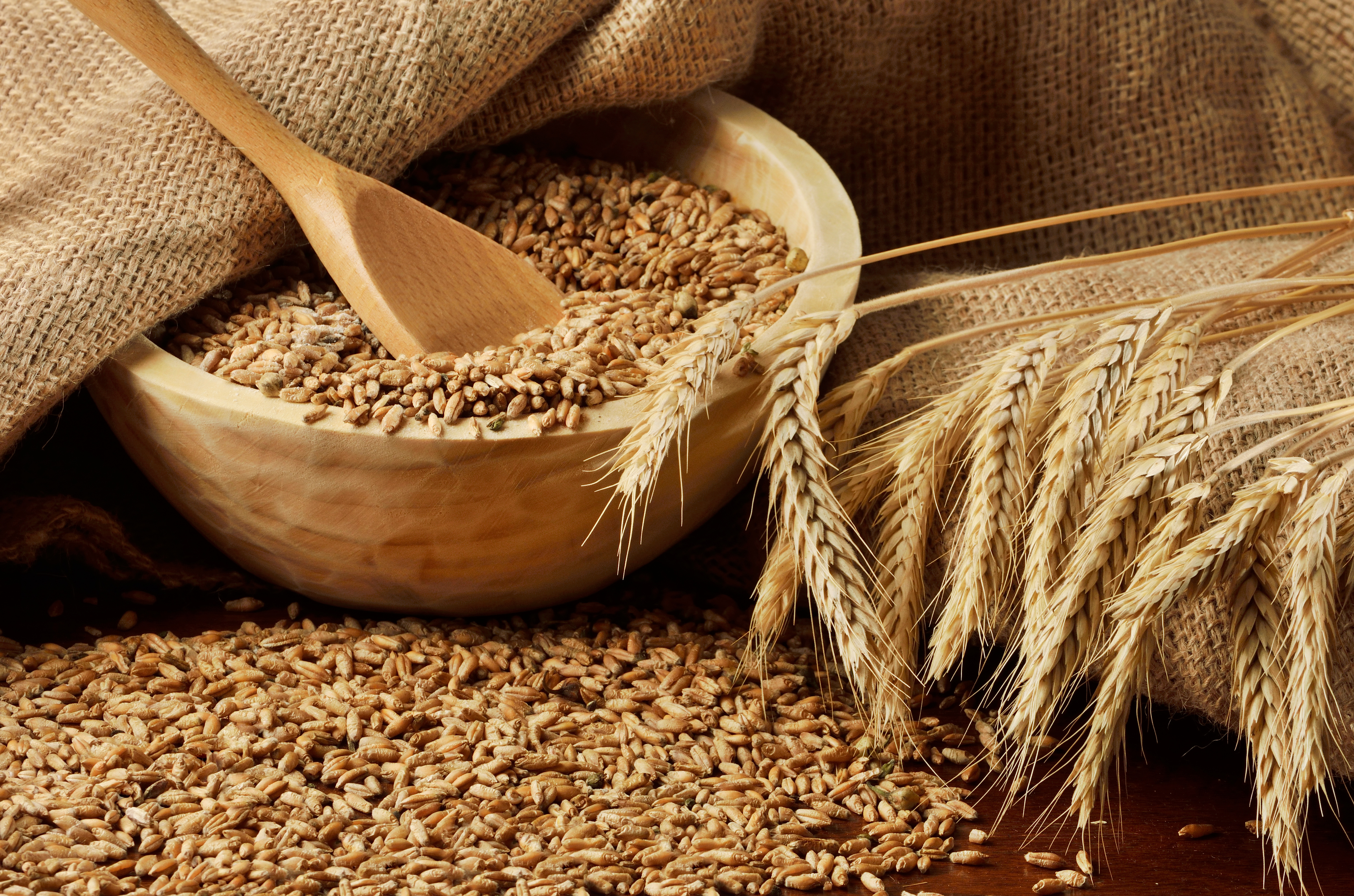 Wheat_adobestock_45878635