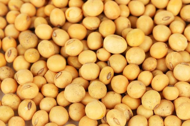 Soybean_a1