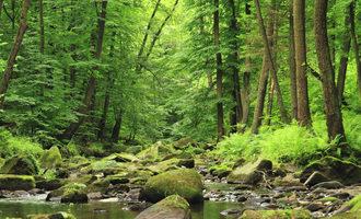 Forest adobestock 90680217 e