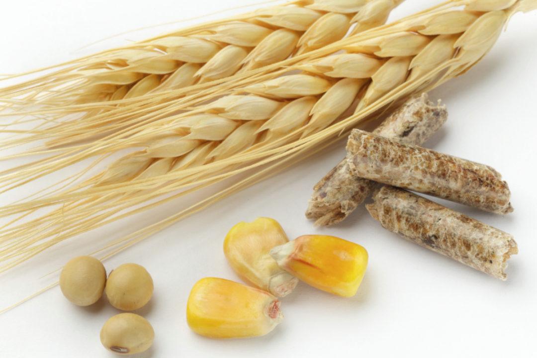 wheat corn soy feed