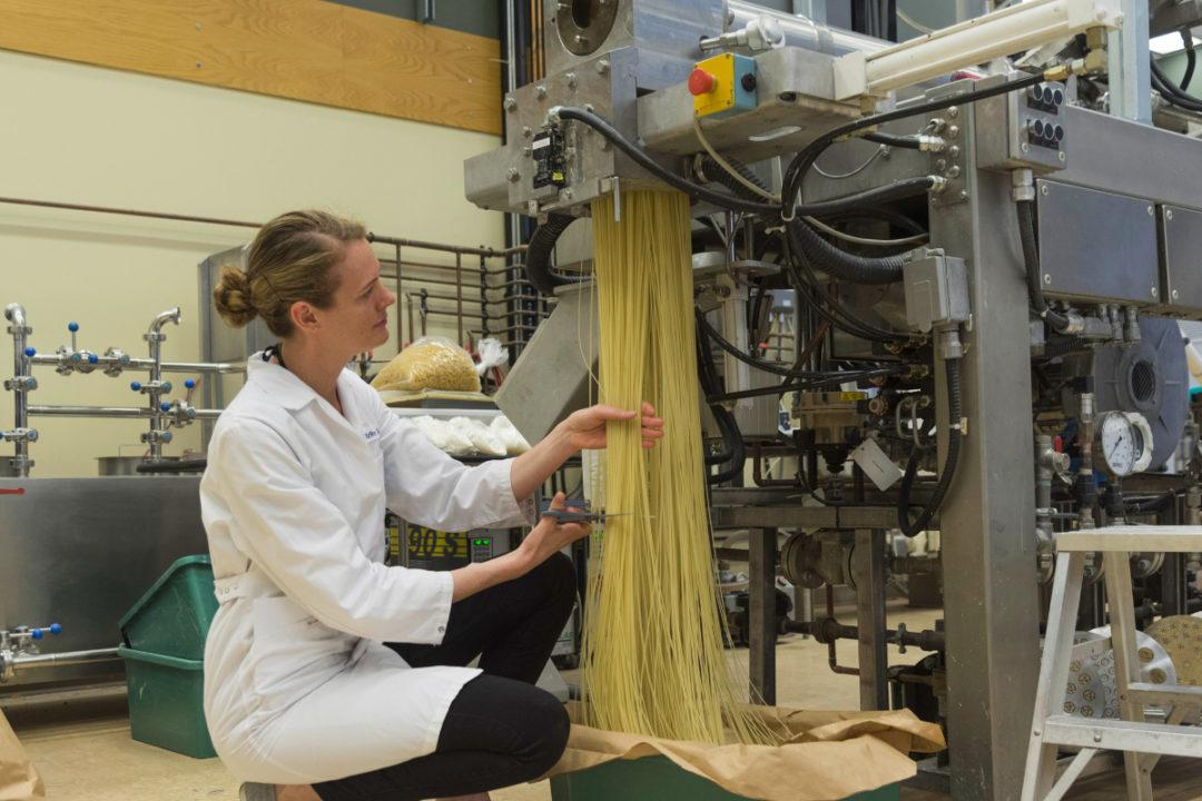 Cigi pasta production