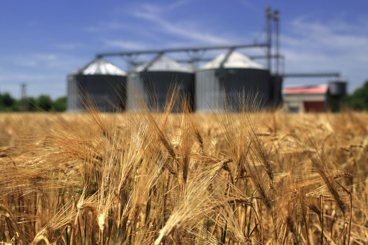 wheat and silos