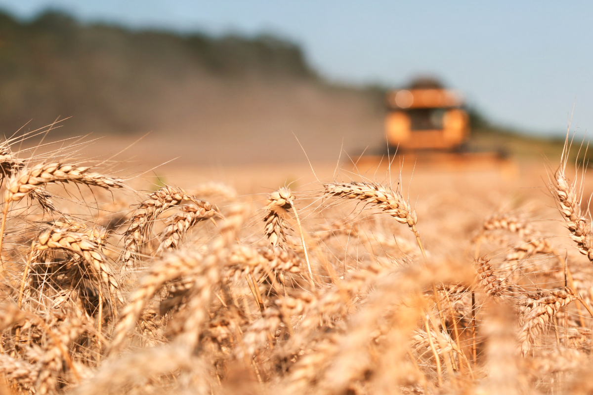 russia wheat output declines by 16 in 2018 2018 12 28 world grain