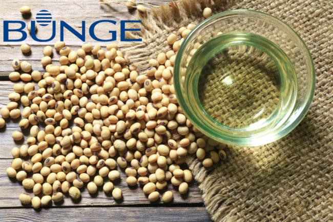 Bunge soybean