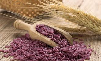 Purple-rice_adobestock_108511048_e