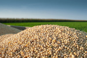 Soybeans4