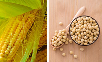 Corn-soy_photo-cred-adobe-stock_e