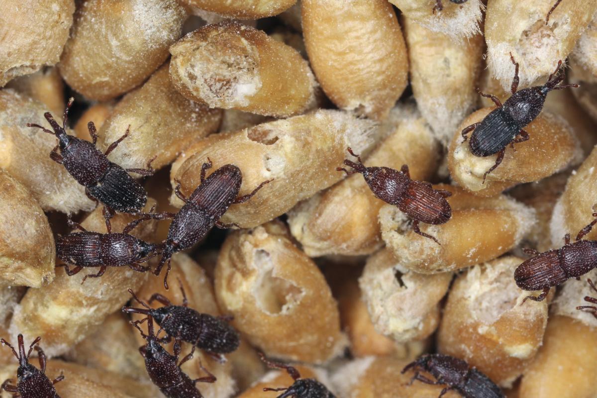 Image result for Global Moth Killer Product Market.jpg