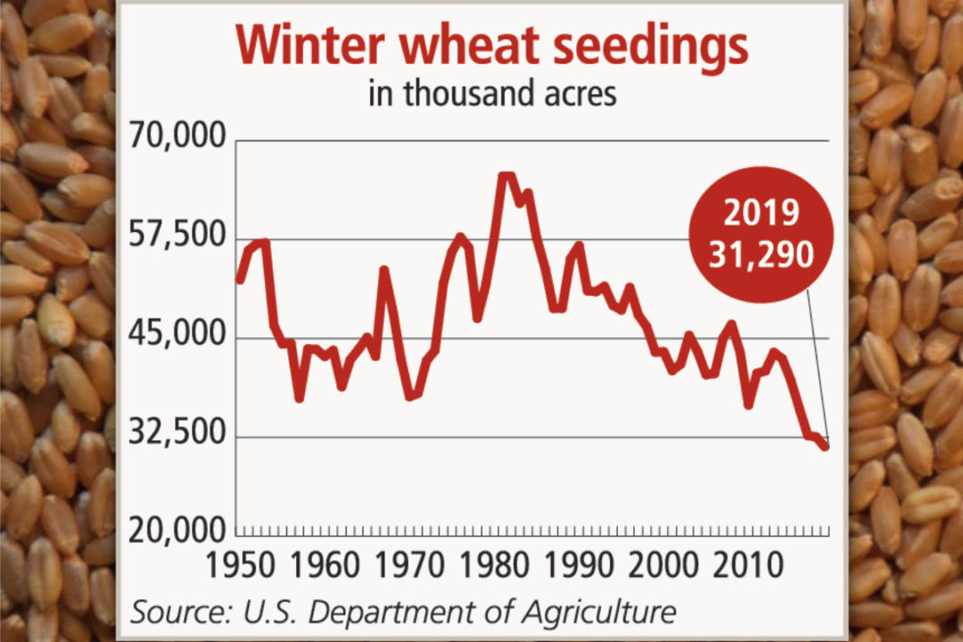 Wheat seeding chart