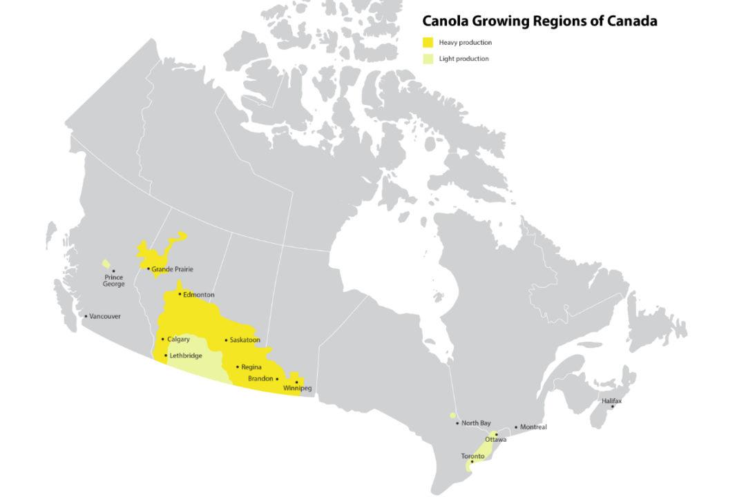 canola growing regions in Canada