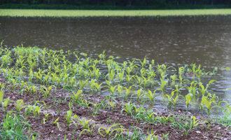 Floodedcrops_photo-cred-adobe-stock_e