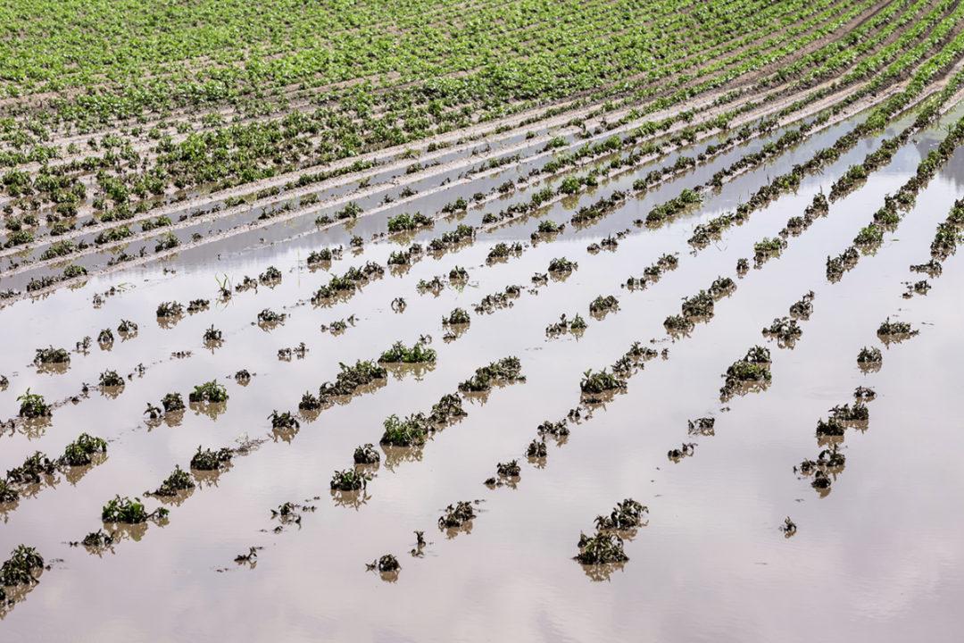 field flooding