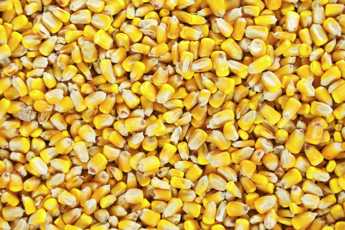 Indonesia Expanding Corn Acreage 2019 04 01 World Grain