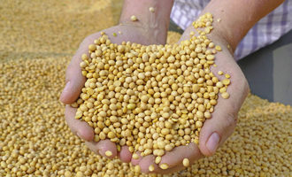 Soybean_adobestock_121958742-7_e1