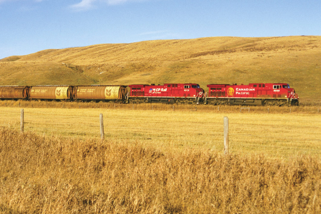 CP Wheat field