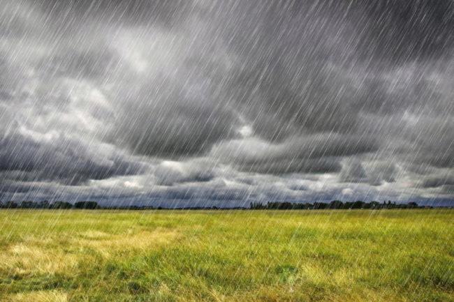 rain field