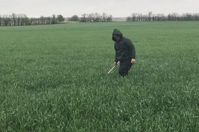 wheat tour
