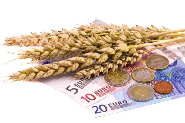 Wheat-euros_adobestock_43943689_e