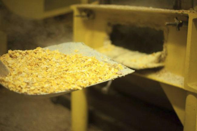 steamflaking corn