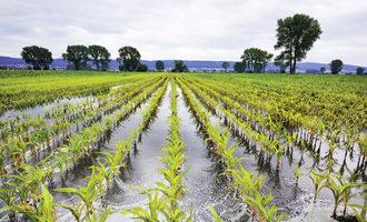 Early-freeze-may-await-waterlogged-crops_july_e