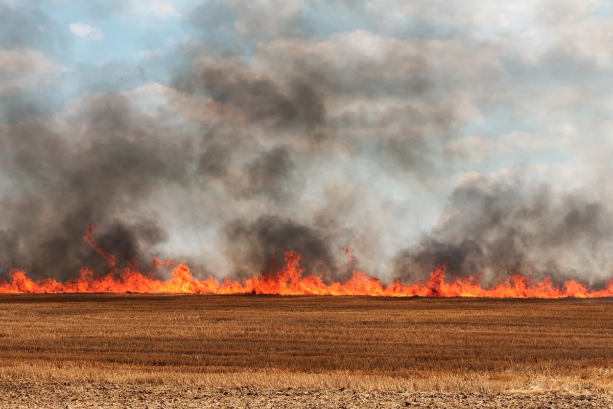 wheat field on fire